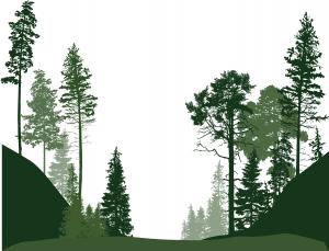 fra skog til bygg
